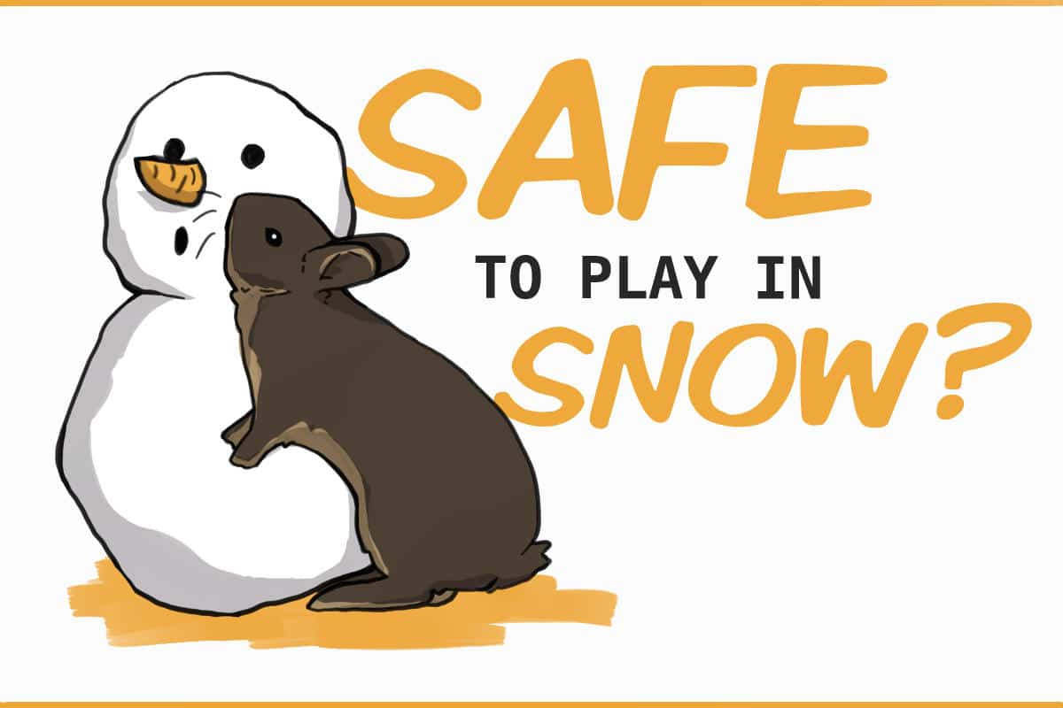 Is it safe for rabbits to play in snow?