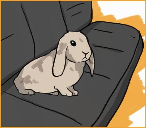 rabbit in backseat of car