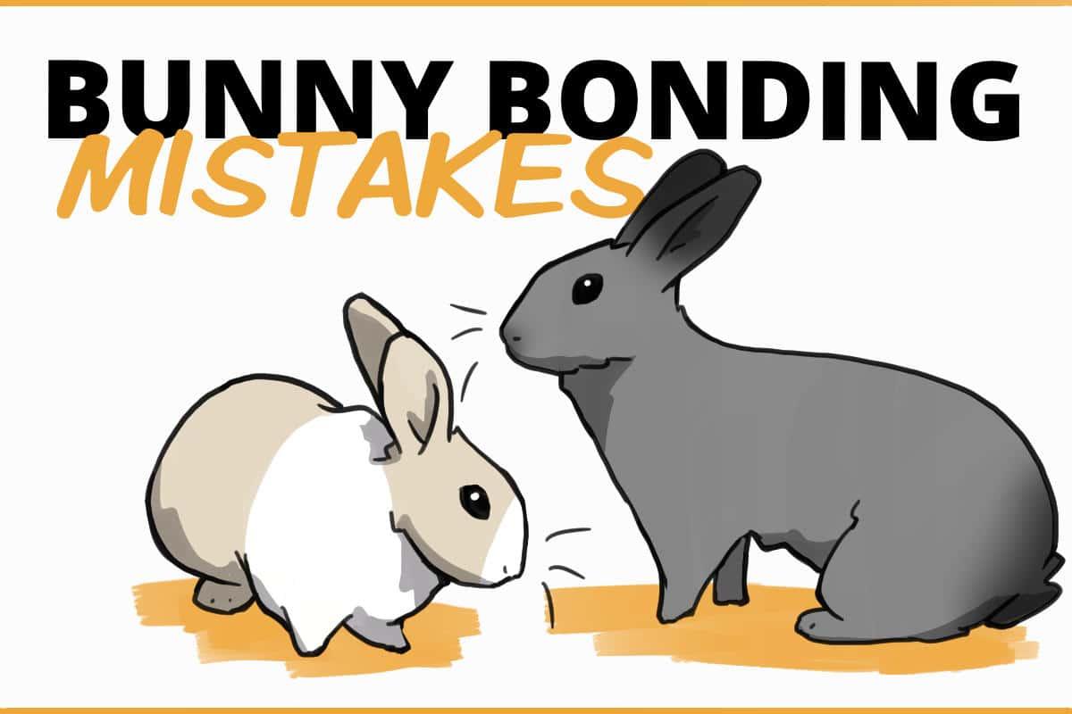 bunny bonding mistakes