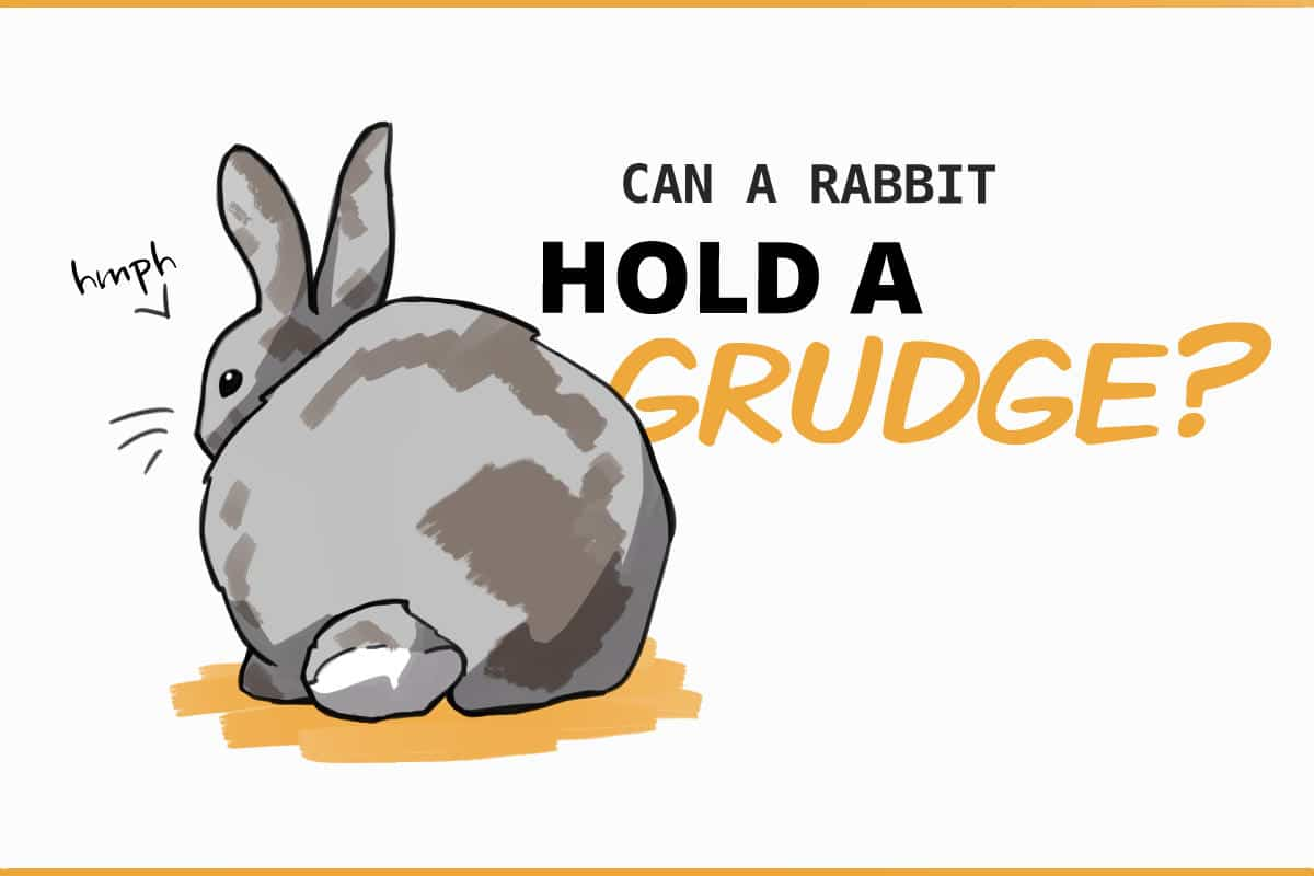 Can a rabbit hold a grudge?