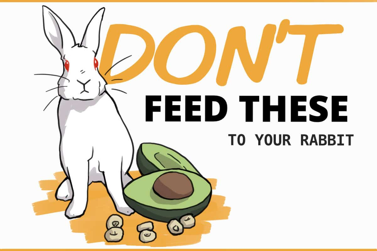 Don't feed these to your rabbit