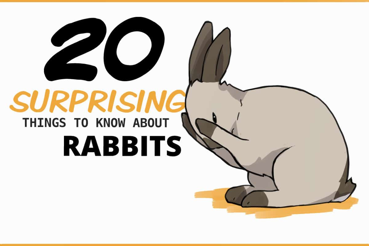 20 surprising things to know before you get a rabbit