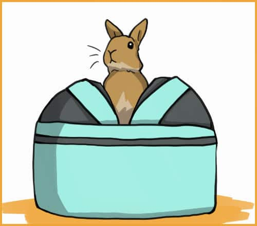 rabbit in sleepypod carrier