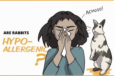 Are rabbits hypo-allergenic?