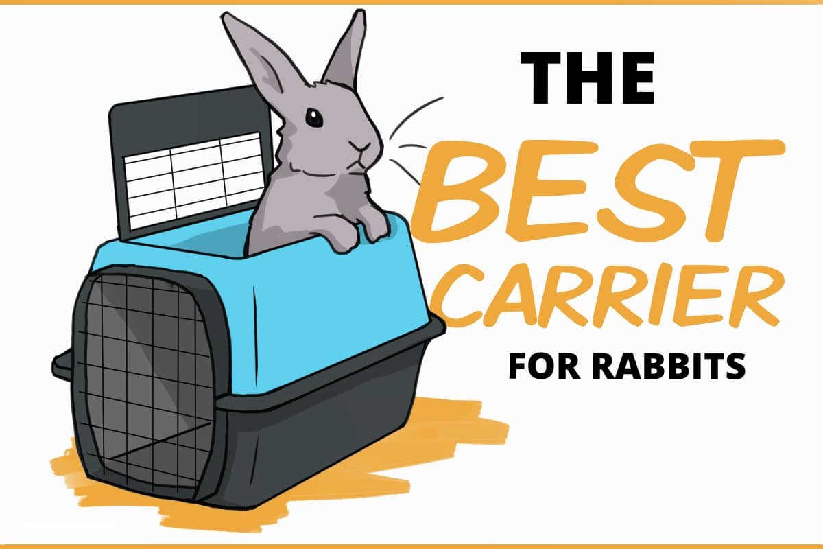 The best carrier for rabbits