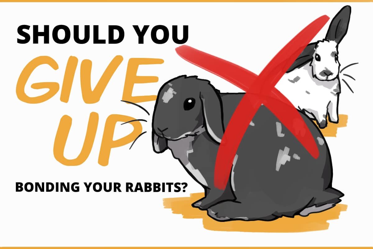 should you give up bonding your rabbits?