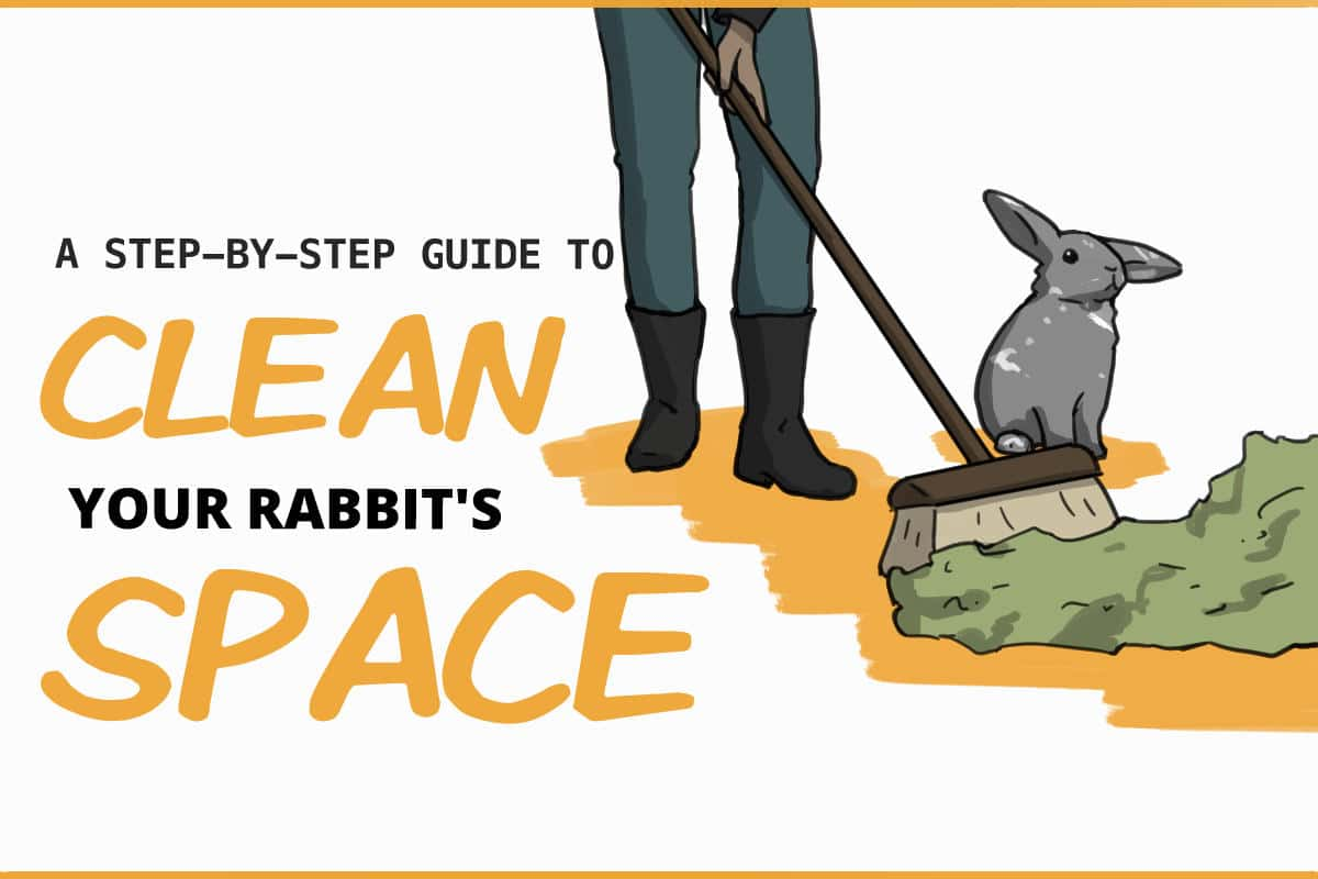 A step by step guide to clean your rabbit's space