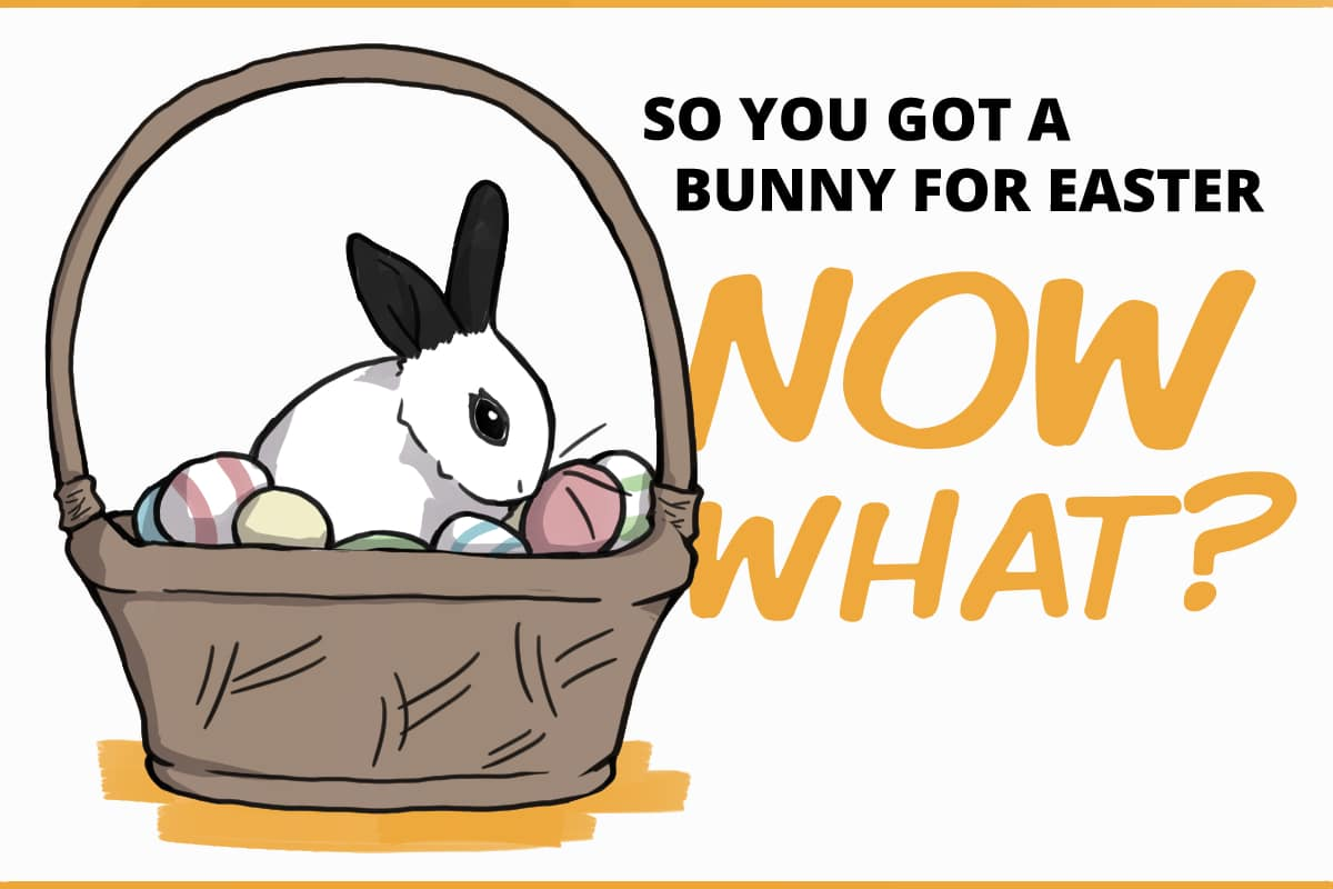 so you got a bunny for easter. Now what?