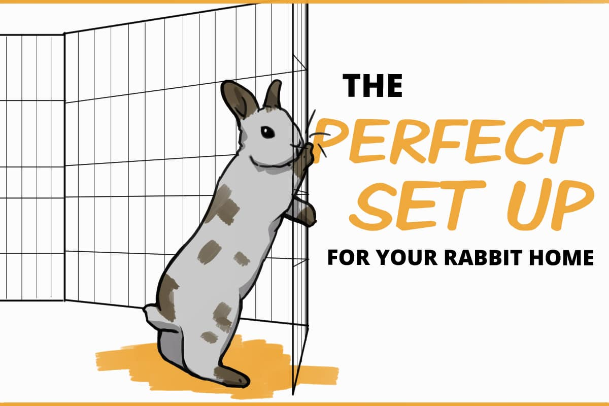 the perfect set up for your rabbit home