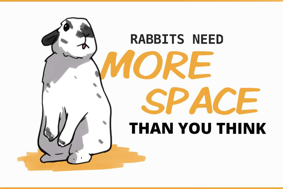 rabbits need more space than you think
