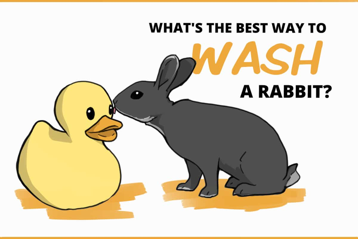 What's the best way to wash a rabbit?