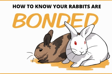 how to know your rabbits are bonded