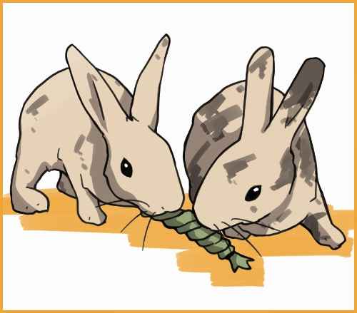 two rabbits playing with a toy