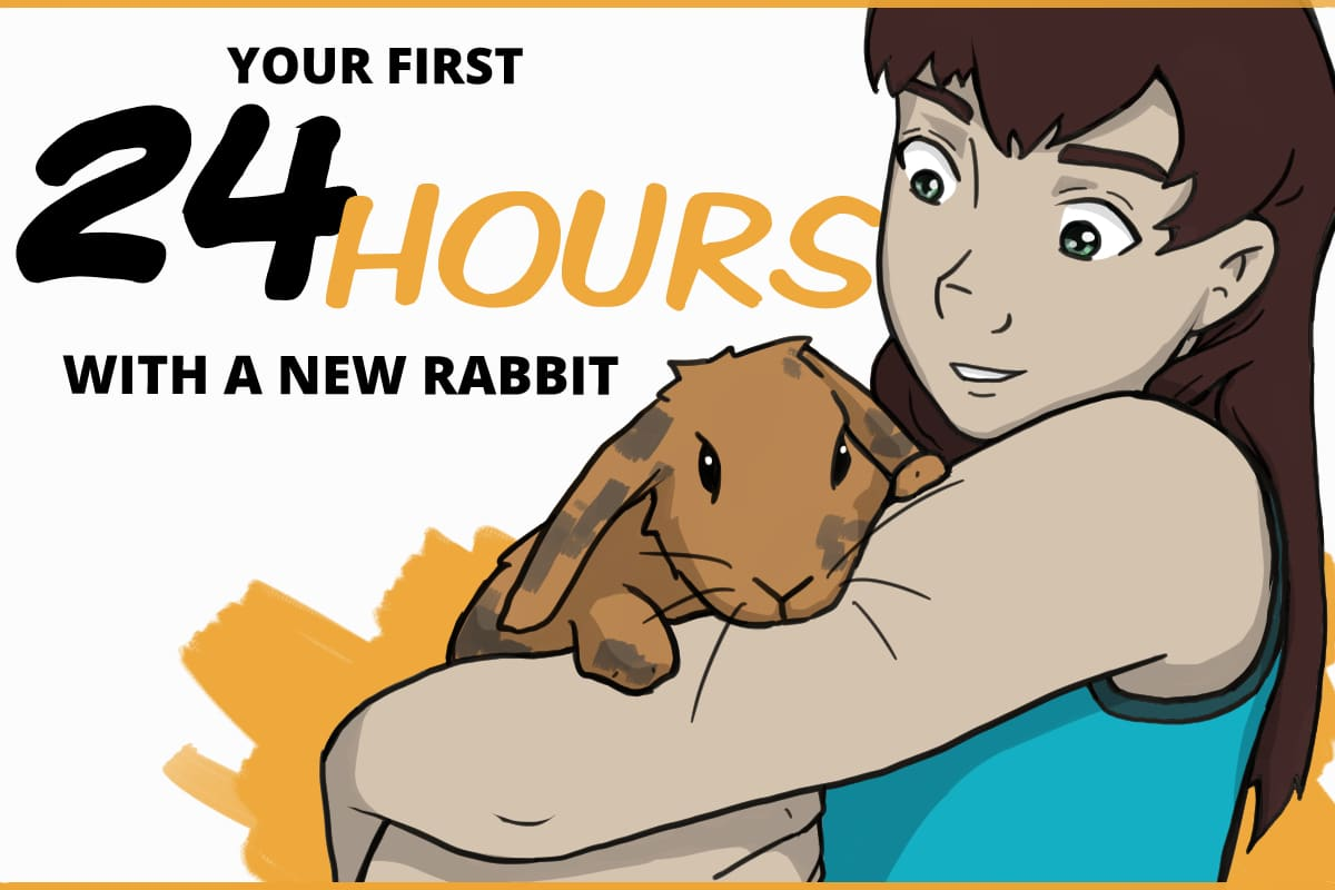 Your first 24 hours with a new rabbit