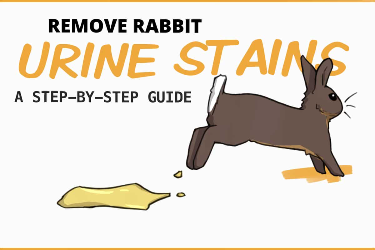 Remove rabbit urine stains: a step-by-step guide