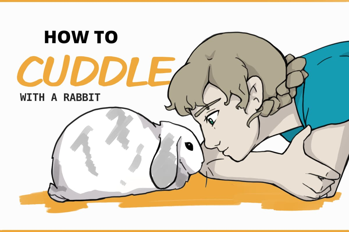 how to cuddle with a rabbit