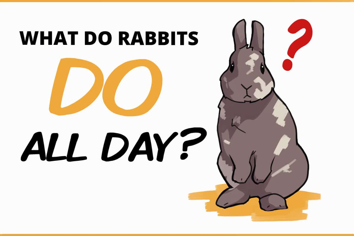 What do rabbits do all day?