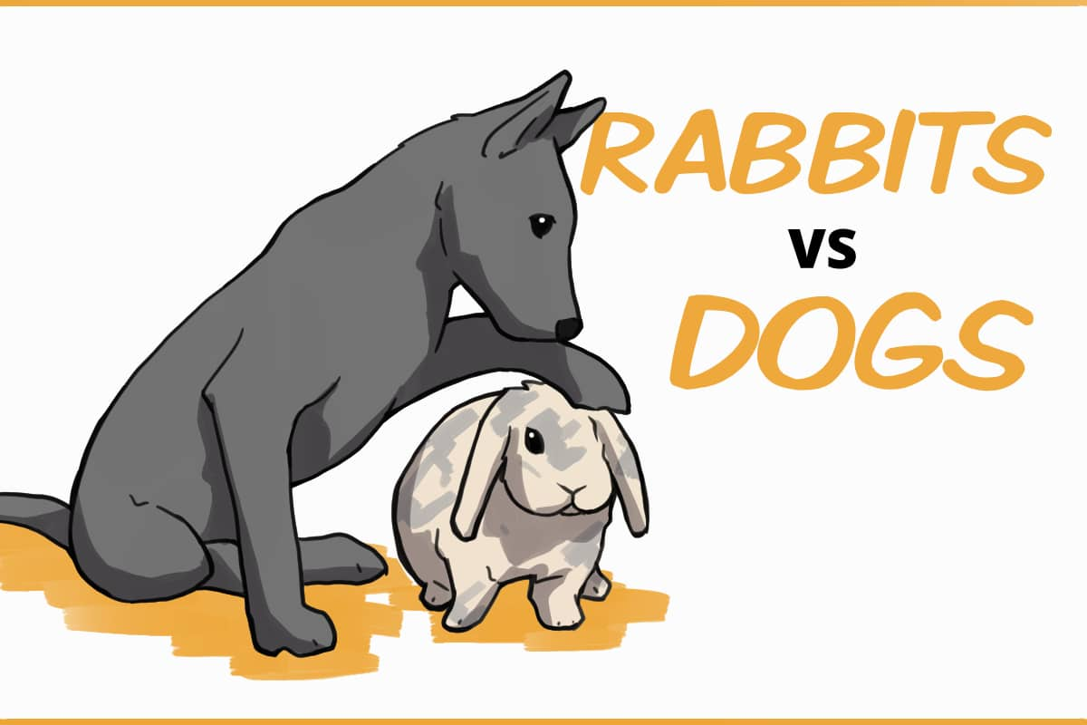 Rabbits vs dogs as pets