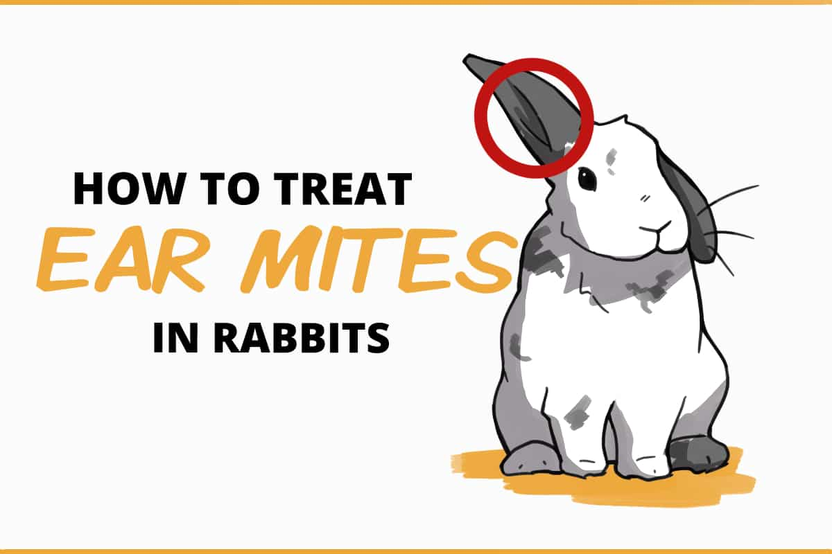 how to treat ear mites in rabbits