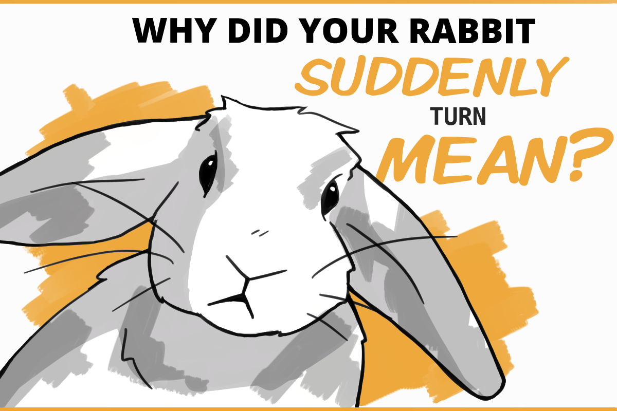 Why did your rabbit suddenly turn mean?