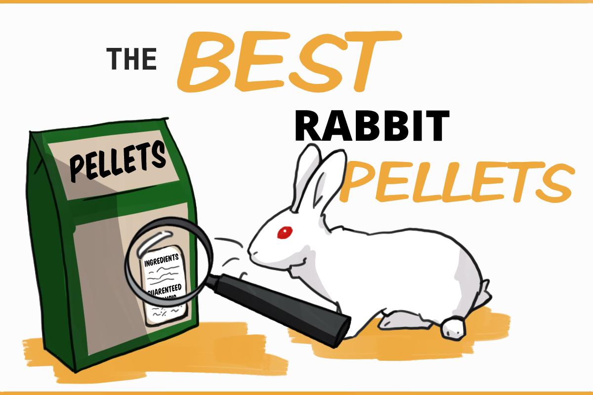 The best rabbit pellets: a nutritional analysis