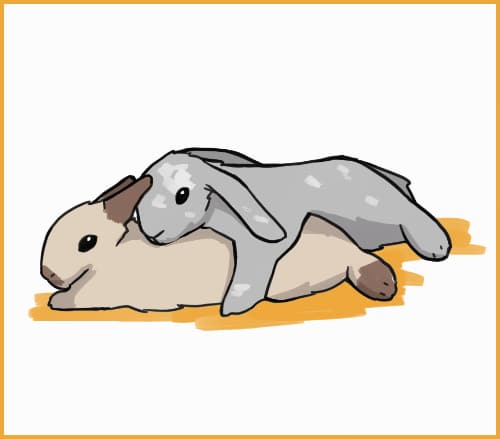 rabbit sleeping on top of another rabbit