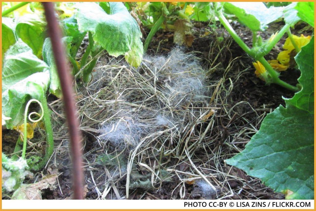 a hidden wild rabbit nest