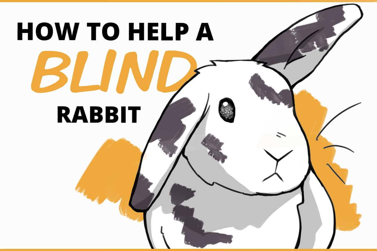 how to help a blind rabbit