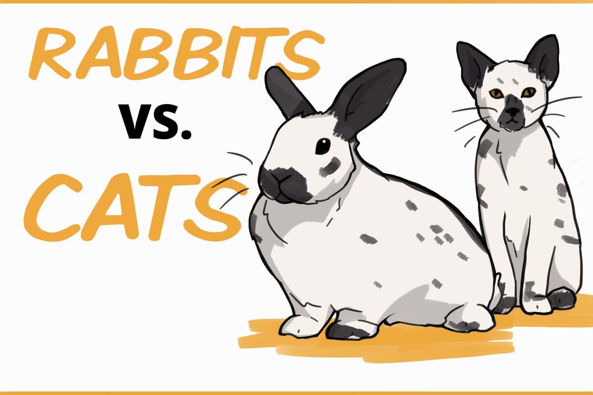 Rabbits vs. cats as pets