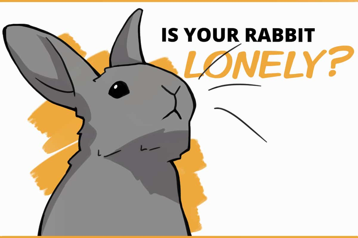 is your rabbit lonely?