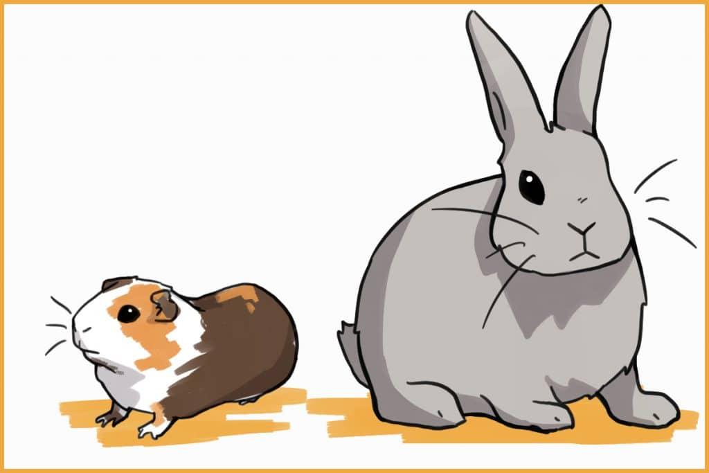 rabbits vs. guinea pigs size
