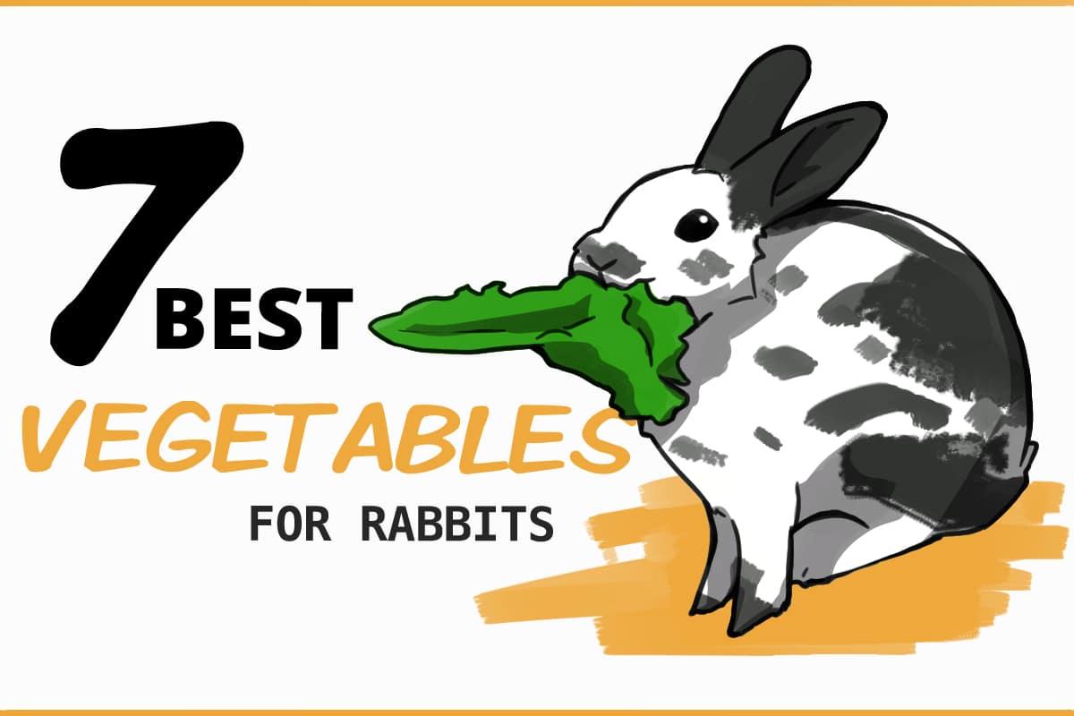 7 Best veggies for rabbits