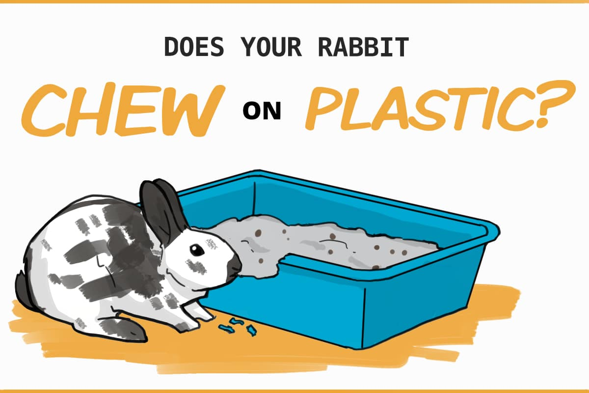 Does your rabbit chew on plastic?