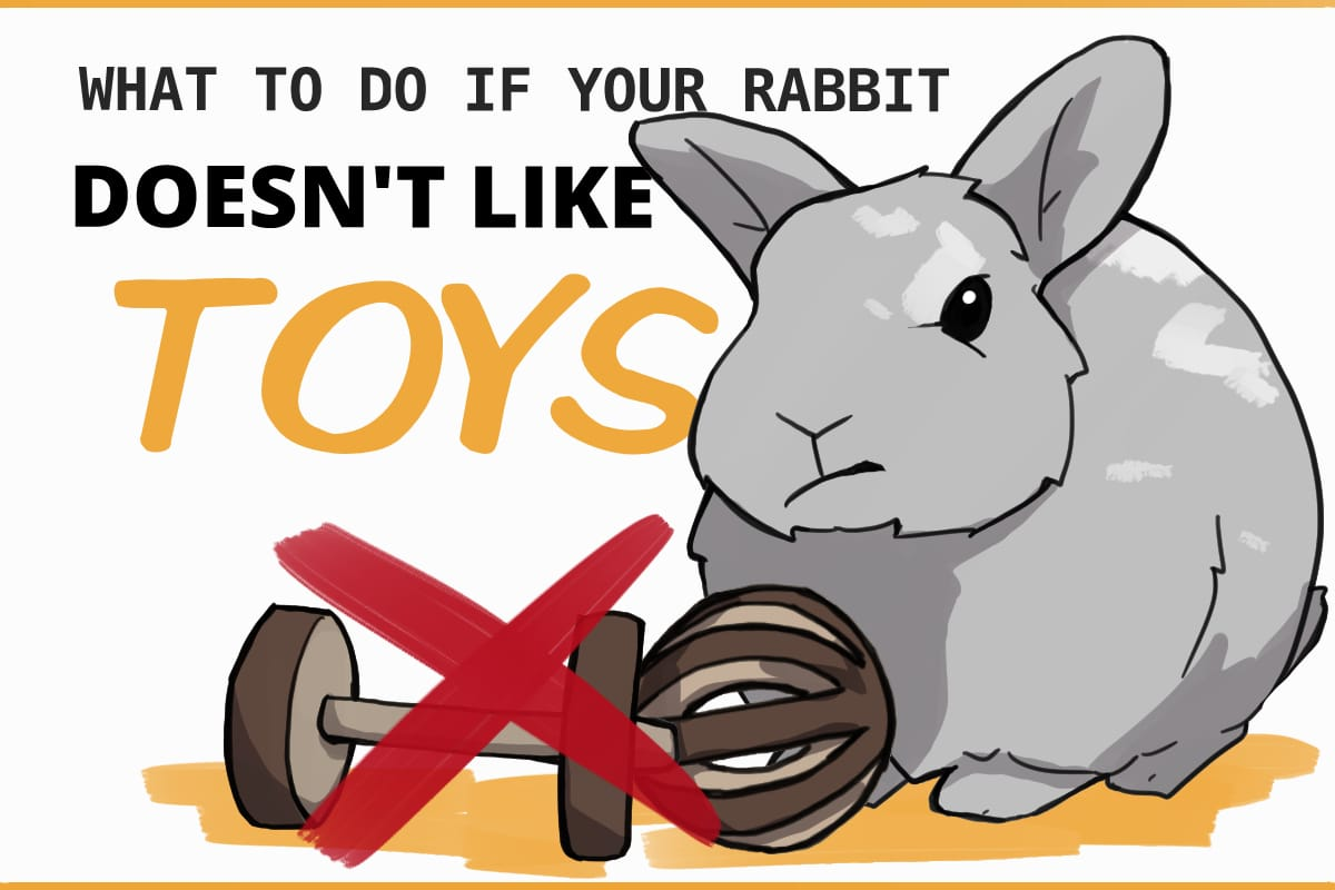 what to do if your rabbit doesn't like toys